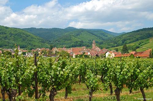 Gîte de charme à Riquewihr : vue sur vignoble - Domaine Selig